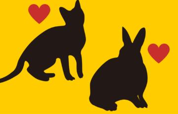 猫, うさぎ, 人気
