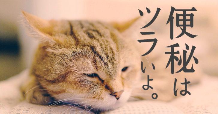 猫, 便秘, 症状