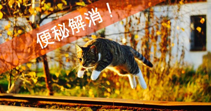 猫, 便秘, 解消