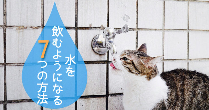 猫, 水, 飲ませる