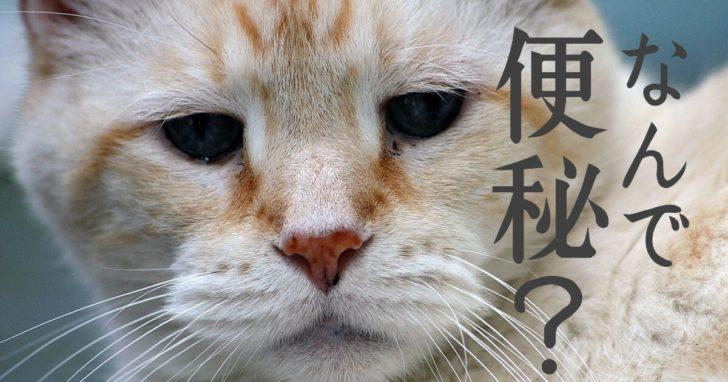 猫, 便秘, 原因