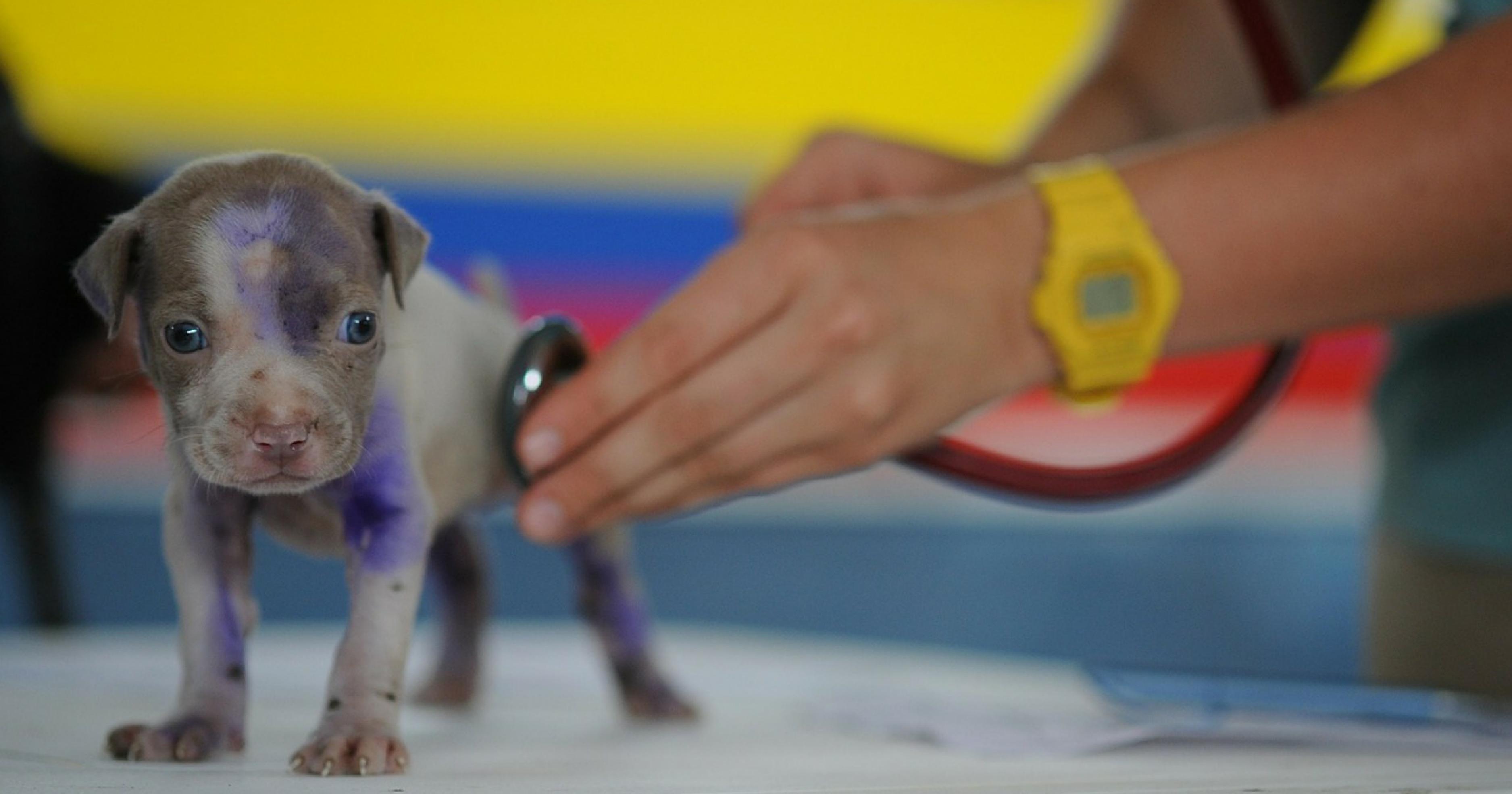 動物病院で診察される子犬