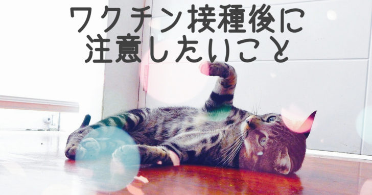 仰向けに寝転がる猫