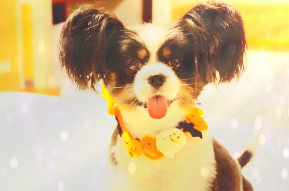 ハロウィン, 犬, 首飾り