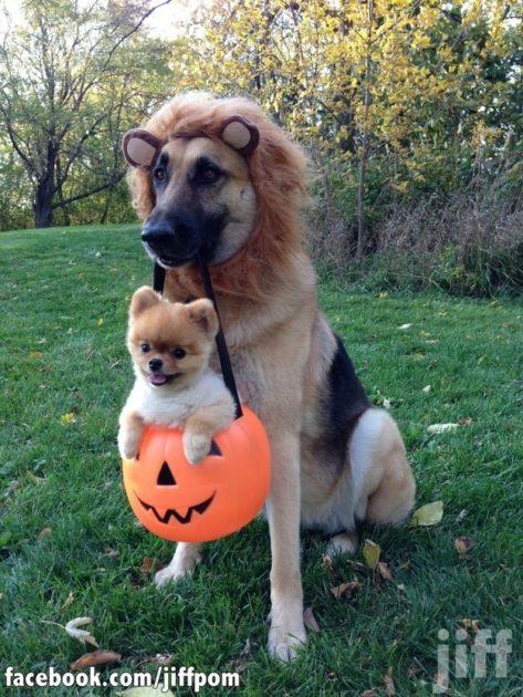 ハロウィン, 犬, 仮装