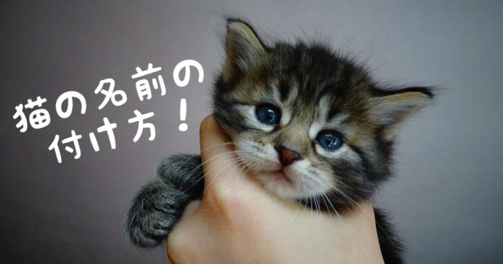 猫, 名前, 付け方