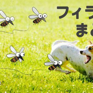 蚊に追いかけられる犬