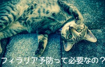 猫, フィラリア, 予防